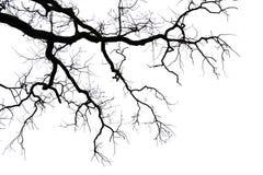 Blattlose Zweige auf Weiß stockfoto