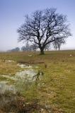 Blattloser Baum Stockfoto