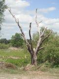 Blattloser Baum Lizenzfreie Stockfotografie
