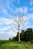 Blattloser Baum auf schönem Himmel Stockfoto