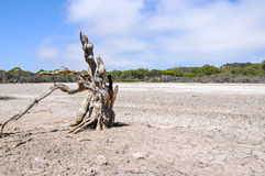 Blattloser Baum: Dürre stockfotografie