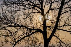 Blattloser Baum in der Hintergrundbeleuchtung Lizenzfreies Stockfoto