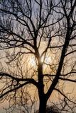 Blattloser Baum in der Hintergrundbeleuchtung Lizenzfreies Stockbild