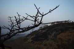 Blattloser Baum gefangen genommen an der Dämmerung Stockbild