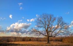 Blattloser Baum im Winter Stockfotos