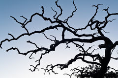 Blattloser Baum im Winter Stockfotografie