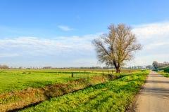 Blattloser Baum neben einer Landstraße in einer ländlichen Landschaft Stockfotos