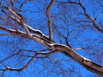Blattloser Baum-Zweig Lizenzfreies Stockfoto