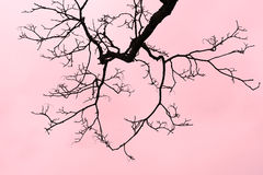 Blattloser Baum-Zweig Lizenzfreie Stockfotografie