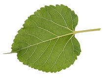 Blattmakrodekoration des Blattes grüne Lizenzfreies Stockbild