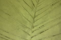 Blattmuster gestempelt auf den alten Wänden stockbilder