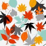 Blattmusterfall-Farbwarme Farbe lizenzfreies stockfoto