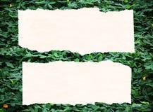 Blattpapierhintergrund lizenzfreies stockbild