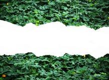 Blattpapierhintergrund stock abbildung