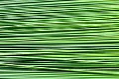 Blattpapyrus-Beschaffenheitshintergrund des langen Grüns Stockfotos