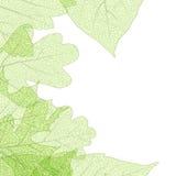 Blattskelett-Herbst tenplate ENV 10 Stockfoto