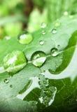 Blattwasser Stockfotografie