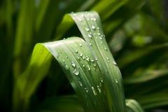 Blattwassertropfen Stockbild