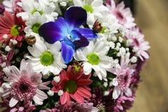 Blau Blume die Pharynx oder ein Hündchen eines Löwes in einer Umwelt von Frühlingsblumen lizenzfreie stockfotos