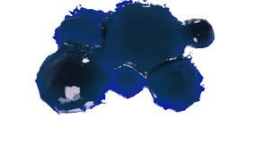 Blau lässt Rückgänge fallen und spritzt auf Weiß Flüssiges Öl stock video