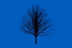 Blau sterben Baumfarbeschattenbild-Kunstdesign Lizenzfreies Stockbild