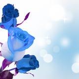Blau stieg stockfotos