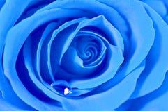 Blau stieg Stockbilder