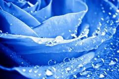 Blau stieg mit Wassertropfen Lizenzfreies Stockbild