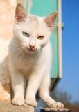 Blau und Gelb gemusterte Katze lizenzfreies stockfoto