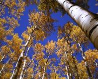 Blau und Gold oben Stockfotografie