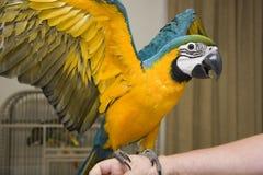 Macaw-Papagei Lizenzfreie Stockfotografie