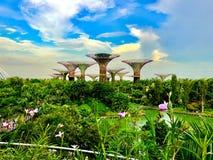 Blau und grün - Singapur-` s botanischer Garten stockfotografie