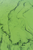 Blaualgen oder Cyanophyta von oben Lizenzfreie Stockfotografie