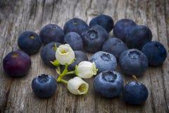 Blaubeerblumen und Früchte (Vaccinium corymbosum) auf hölzernem ta Lizenzfreies Stockfoto
