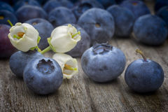 Blaubeerblumen und Früchte (Vaccinium corymbosum) auf hölzernem ta Stockfoto