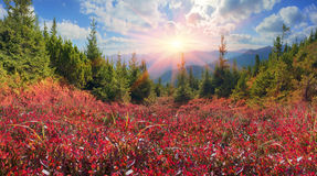 Blaubeerdecke des Herbstes Lizenzfreie Stockfotos