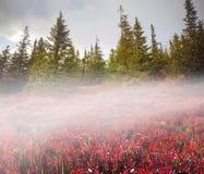 Blaubeerdecke des Herbstes Stockbilder