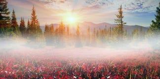 Blaubeerdecke des Herbstes Stockfotos
