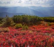 Blaubeerdecke des Herbstes Lizenzfreie Stockbilder