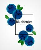 Blaubeere Lizenzfreie Stockbilder