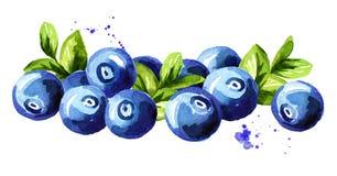 Blaubeere Haufen von frischen reifen Beeren mit Blättern Übergeben Sie die gezogene Aquarellillustration, die auf weißem Hintergr lizenzfreie abbildung