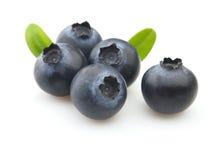 Blaubeere mit Blättern Lizenzfreies Stockfoto
