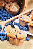 Blaubeere-Muffins Stockfotos
