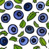 Blaubeere und Blätter nahtlos Gekritzel-Art-Vektor-Design, lokalisiert auf weißem Hintergrund Lizenzfreie Stockfotografie