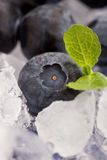 Blaubeeren auf Eis lizenzfreie stockfotos