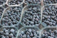 Blaubeeren eingesetzt in Plastikkörbe Lizenzfreies Stockbild