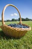 Blaubeeren im Korb Lizenzfreies Stockfoto