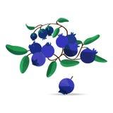 Blaubeeren und Blätter auf weißem Feld Stockfotografie