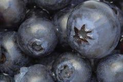 Blaubeerhintergrund: frische reife Fruchtnahaufnahme Lizenzfreies Stockbild