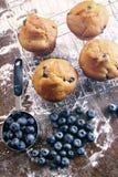 Blaubeermuffins auf Backengestell Stockfoto